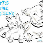 The Cats of the Hang Seng 2020